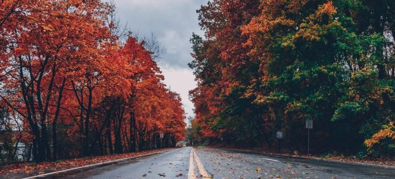 A road in the autumn which is one of the cheapest times to relocate