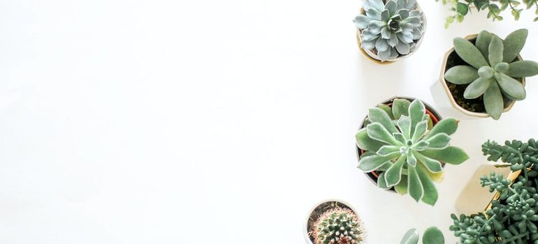 Plants that you should not move if youre following tips for packing for moving in a hurry.
