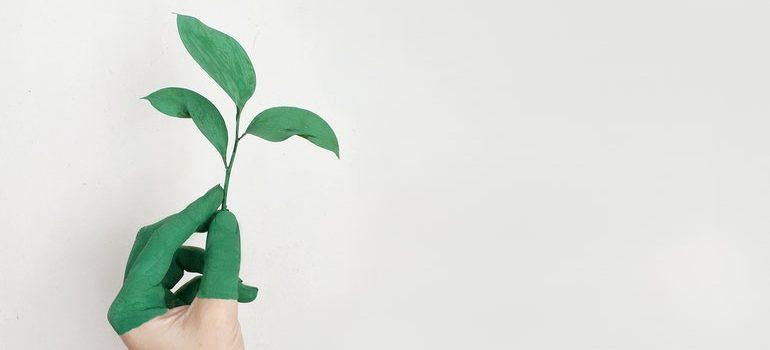 Hand holding plant.