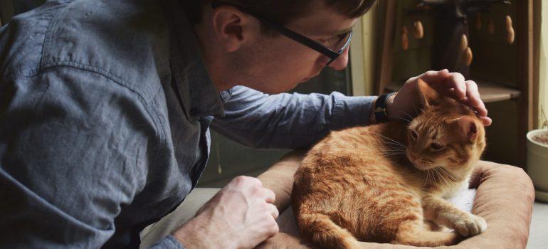 person petting an orange cat