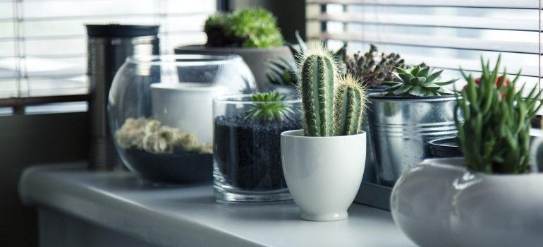 Different plants that you need to transport personally when moving.