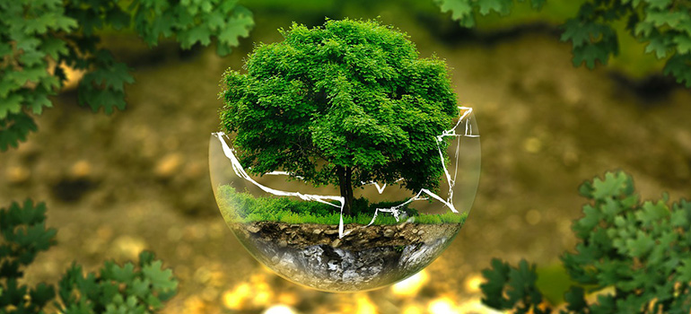 A tree in a glass bowl