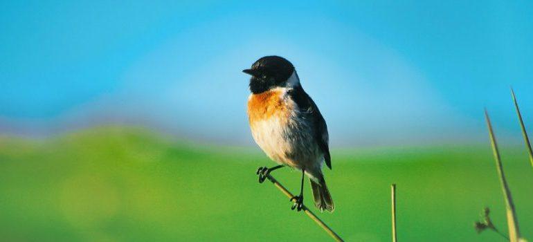 one of the benefits of living in Renton WA - amazing birds